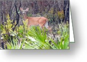 White Tail Deer Print Digital Art Greeting Cards - Whitetail Deer I Greeting Card by Sheri McLeroy