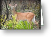 White Tail Deer Print Digital Art Greeting Cards - Whitetail Deer II Greeting Card by Sheri McLeroy