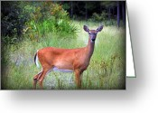 White Tail Deer Print Digital Art Greeting Cards - Whitetail Deer III Greeting Card by Sheri McLeroy