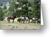 Wild Horse Greeting Cards - Who is Looking at Us Greeting Card by Ken Smith