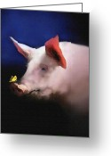 Boar Greeting Cards - Who is snooty Greeting Card by Robert Foster