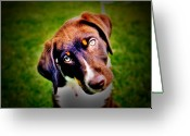 Puppies Greeting Cards - Who Me Greeting Card by Emily Stauring