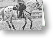 Dressage Photo Greeting Cards - Whoa Greeting Card by East Coast Barrier Islands Betsy A Cutler