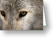 Watchful Eye Greeting Cards - Whos Afraid Greeting Card by Jim DeLillo