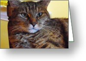 Killer Cats Greeting Cards - Whose a Nice Killer Greeting Card by Jessie  Flieg
