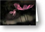 Backlit Greeting Cards - Wide Open Greeting Card by Bonnie Bruno