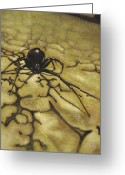 Black Widow Greeting Cards - Widow Greeting Card by Adam Strong