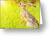 Hare Greeting Cards - Wild african hare Greeting Card by Anna Omelchenko