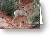 Garden Of The Gods Greeting Cards - Wild and Pretty - Garden of the Gods Colorado Springs Greeting Card by Christine Till