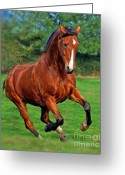 Wild Horse Greeting Cards - Wild At Heart Vol 2 Greeting Card by Angel  Tarantella