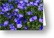 Blue Flowers Digital Art Greeting Cards - Wild Blue Greeting Card by Terril Heilman