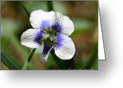 Flower Photos Greeting Cards - Wild Blue Violet Greeting Card by Neal  Eslinger