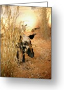 Boar Greeting Cards - Wild Boar Greeting Card by Marilyn Hunt