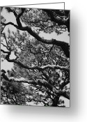 Golden Gate Park Greeting Cards - Wild Branches Greeting Card by Carol Groenen