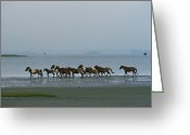 Refuges Greeting Cards - Wild Chincoteague Ponies Run Greeting Card by Medford Taylor