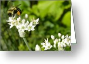 White And Green Greeting Cards - Wild Chives and Bee Greeting Card by Laura Yamada