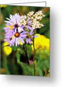 Marty Koch Greeting Cards - Wild Floral Greeting Card by Marty Koch