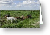 Gaited  Horse Greeting Cards - Wild Florida Cracker Horses Greeting Card by Lynn Palmer