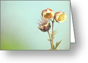 Wildflower Photography Greeting Cards - Wild Flower Greeting Card by copyright by Elena Litsova Photography