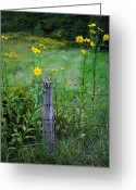 Inner Peace Greeting Cards - Wild Flower Fence Greeting Card by Robert Harmon