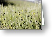 Wildflower Photography Greeting Cards - Wild Flower Field Greeting Card by Rolfo