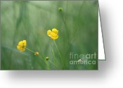 Greens Framed Prints Greeting Cards - Wild flowers Greeting Card by Andreea Marian