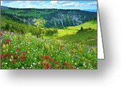 Lush Greeting Cards - Wild Flowers Blooming On Mount Rainier Greeting Card by Feng Wei Photography