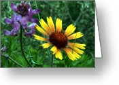 Mario Brenes Simon Greeting Cards - Wild flowers Greeting Card by Mario Brenes Simon