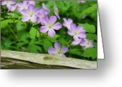 Split-rail Fence Greeting Cards - Wild Geraniums Greeting Card by Michael Peychich