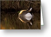 Wild Goose Greeting Cards - Wild Goose Greeting Card by Angel  Tarantella