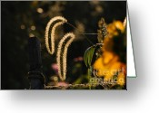 Wild Grass Greeting Cards - Wild Grass Glow Greeting Card by Edward Sobuta