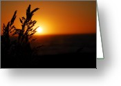 Wild Grass Greeting Cards - Wild Grass Greeting Card by Tom Melo