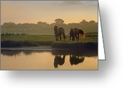 Wild Horse Greeting Cards - Wild Horse Pair Grazing At Assateague Greeting Card by Tim Fitzharris