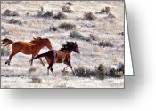 Quarter Horses Greeting Cards - Wild Horse Spirited Run Greeting Card by SB Sullivan