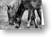 Iphonesia Greeting Cards - Wild Horses 1 Greeting Card by Mickey Hatt