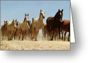Running Horse Greeting Cards - Wild Horses Greeting Card by Antonio Arcos Aka Fotonstudio Photography