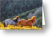 Bulgaria Greeting Cards - Wild Horses Greeting Card by Evgeni Dinev