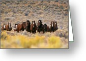 Wild Horse Greeting Cards - Wild Horses Greeting Card by Inga Spence and Photo Researchers