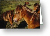 Beach Grass Greeting Cards - Wild Horses On Sable Island Greeting Card by Justin Guariglia