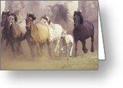 Running Horse Greeting Cards - Wild Horses Running Greeting Card by John Foxx