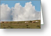 Wild Horses Greeting Cards - Wild Mongolian Horses Greeting Card by Alan Toepfer