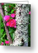 Lichen Greeting Cards - Wild One Greeting Card by Thomas R Fletcher