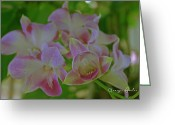 Dendrobium Greeting Cards - Wild Orchids Greeting Card by Georgia Fowler