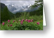 Dreary Greeting Cards - Wild peonies Greeting Card by Pavel  Filatov