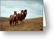 Three Animals Greeting Cards - Wild Ponies In Welsh Countryside Greeting Card by Polly Thomas
