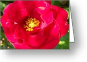 Decor Floral Picture Cards Greeting Cards - Wild Rose Greeting Card by Marsha Heiken