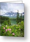 Purple Flower Greeting Cards - Wild roses and mountain lake in Jasper National Park Greeting Card by Elena Elisseeva