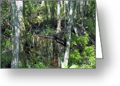 Florida Swamp Greeting Cards - Wild Swamp Greeting Card by Kenneth Albin