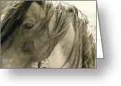 Horse Pyrography Greeting Cards - Wild  Greeting Card by Tess  Marie
