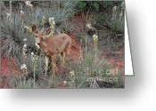 Paradise Greeting Cards - Wild Times at Garden of the Gods Colorado Greeting Card by Christine Till
